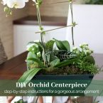 orchid and house plant DIY arrangement in a wooden box