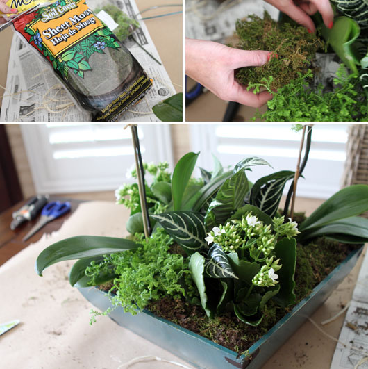 using sheet moss to decorate orchid centerpiece