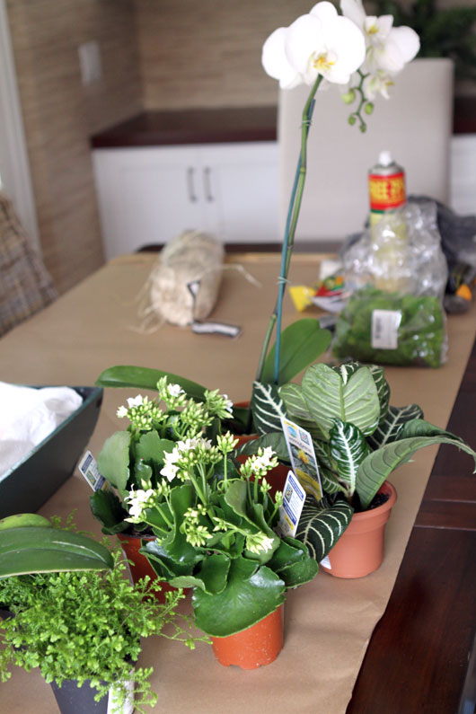 small house plants and 2 potted orchids on brown kraft paper
