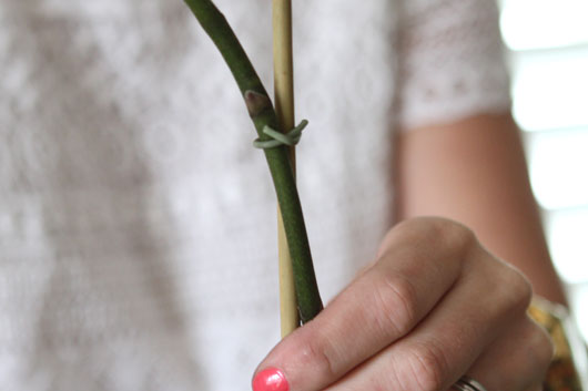 woman tying orchid plant to a piece of florist bamboo