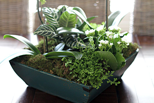 orchid arrangement with succulents, ferns and moss
