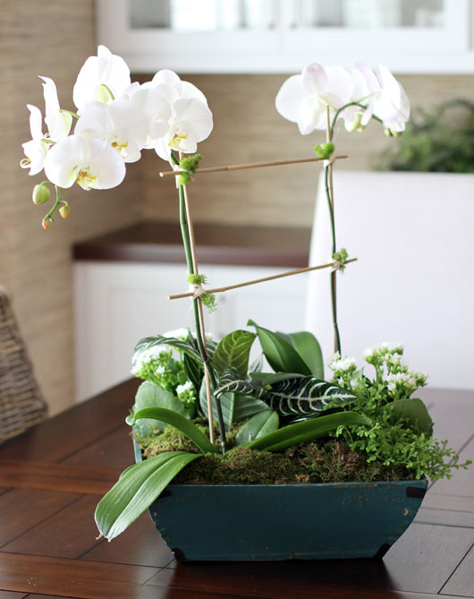 2 orchid plants and small house plants in a blue container on a wood table