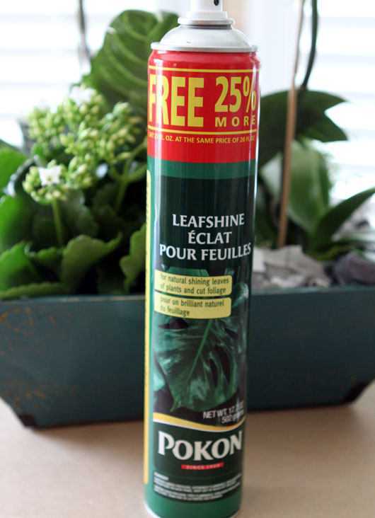 can of leaf shine next to a potted plant