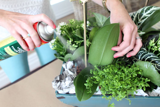 spray-plants-with-leaf-shine