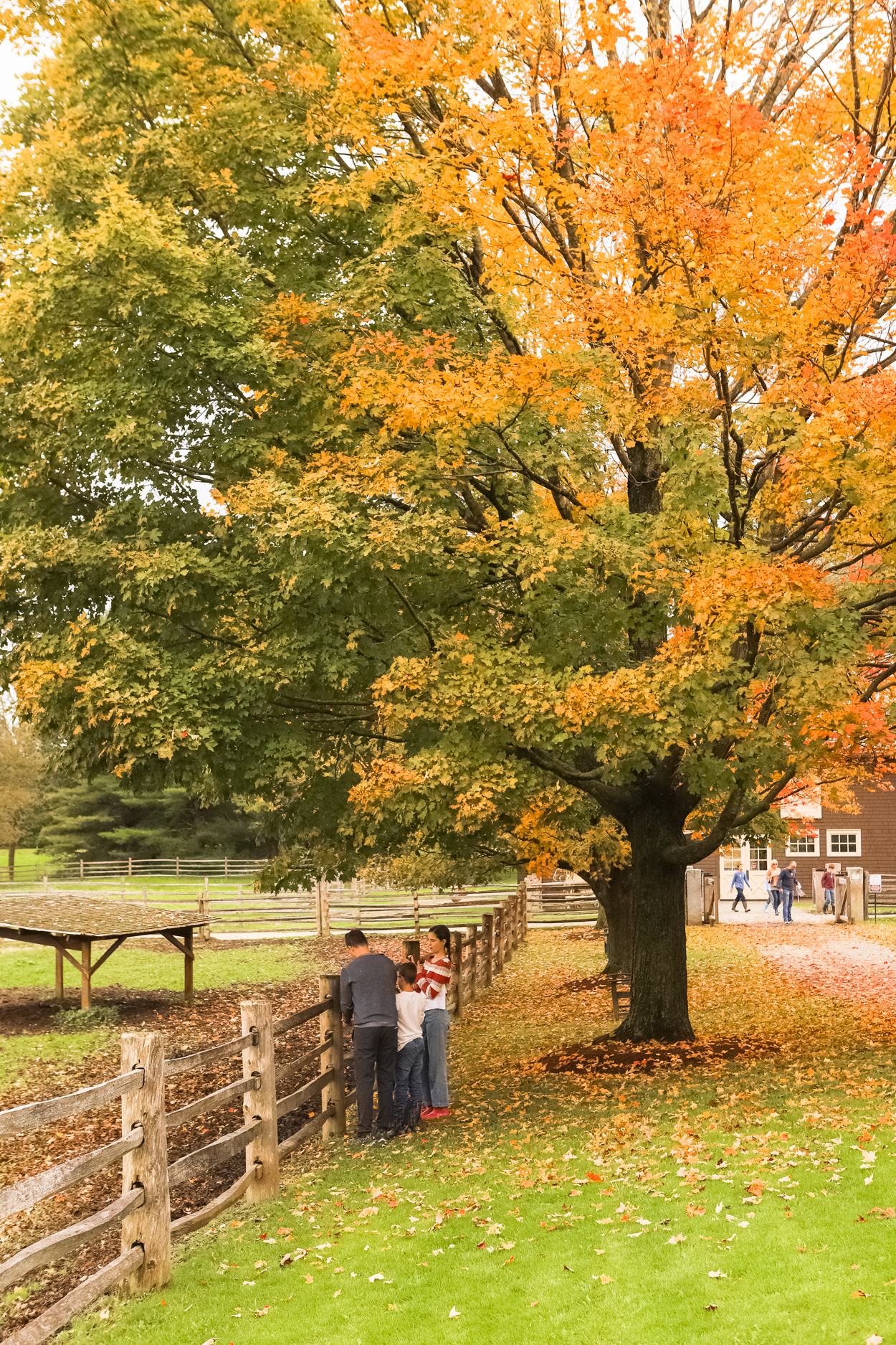 Family standing at a wooden fence in front of oak tree at a dairy farm in Vermont in the Fall