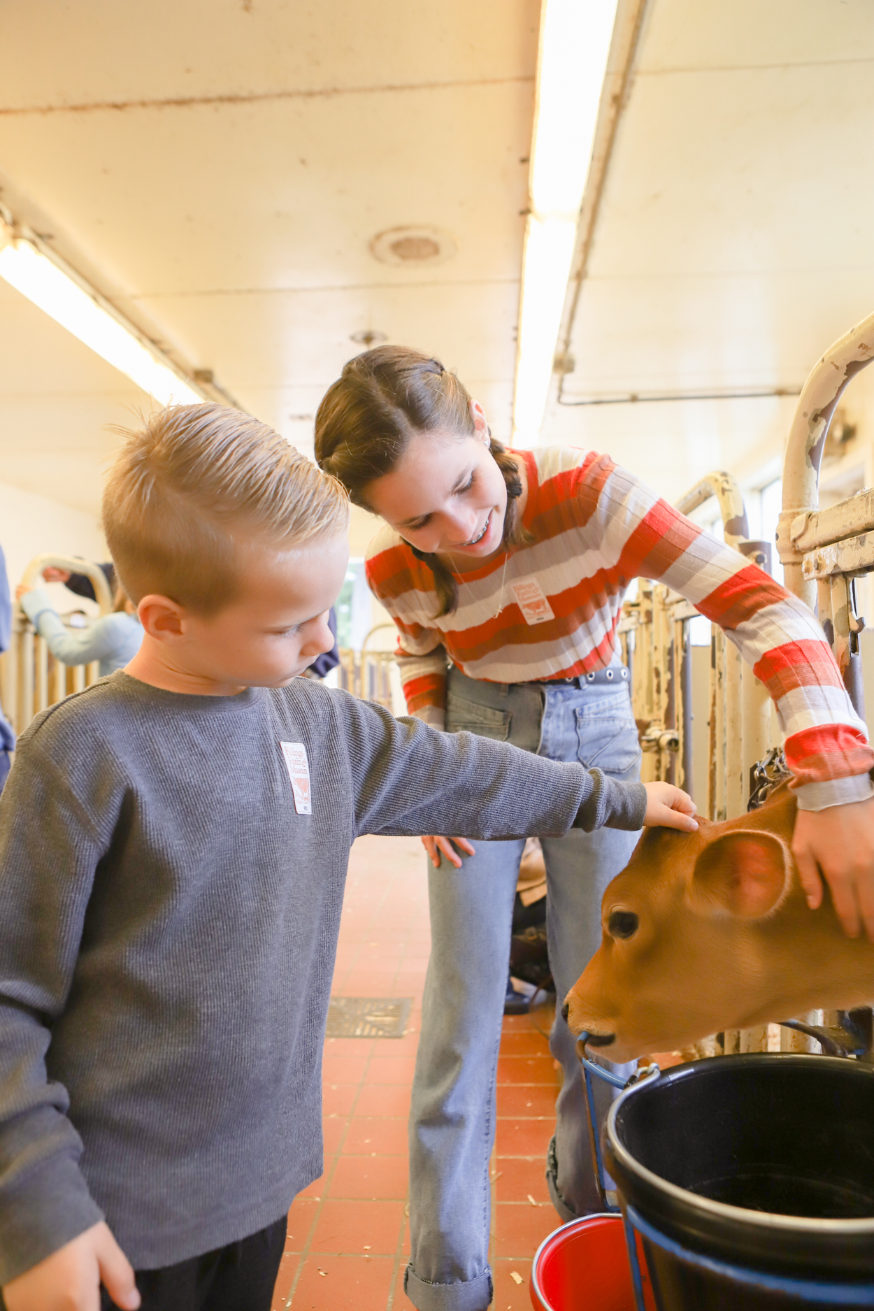 Young boy and girl petting a calf at Billings Dairy Farm in Woodstock Vermont
