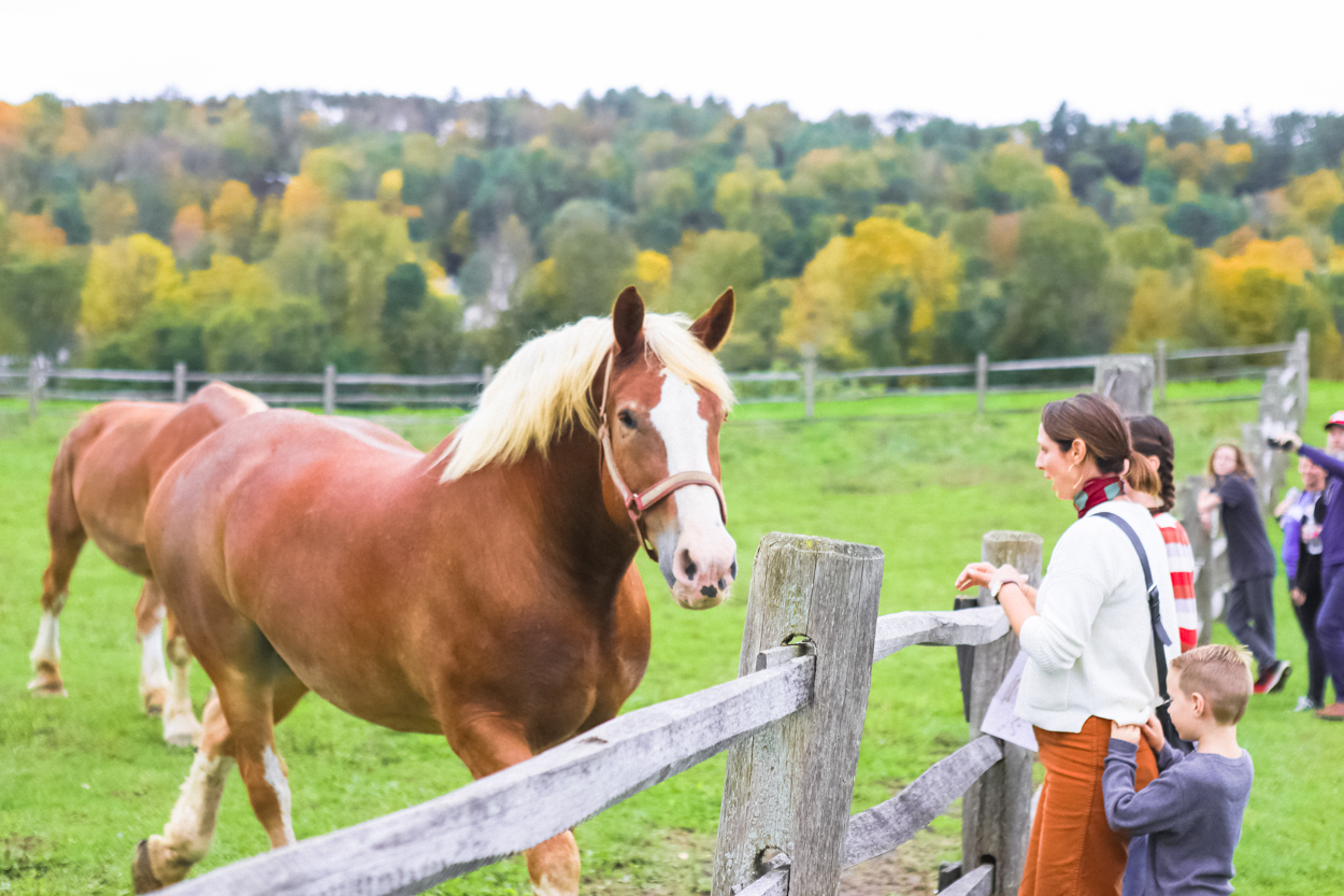 People standing at wooden fence looking at red draft horse in green pasture