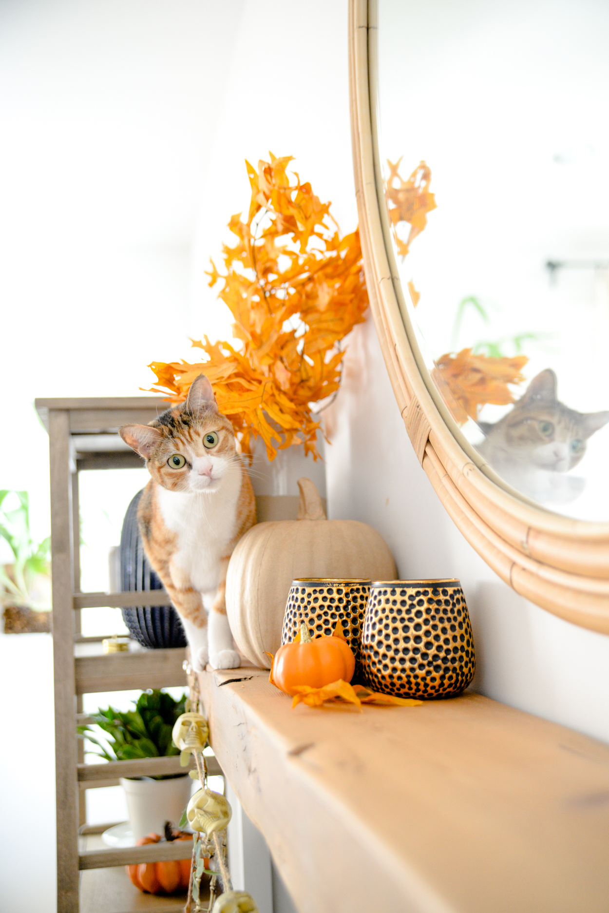 White and orange cat walking along a wood beam mantel decorated with orange leaves and pumpkins
